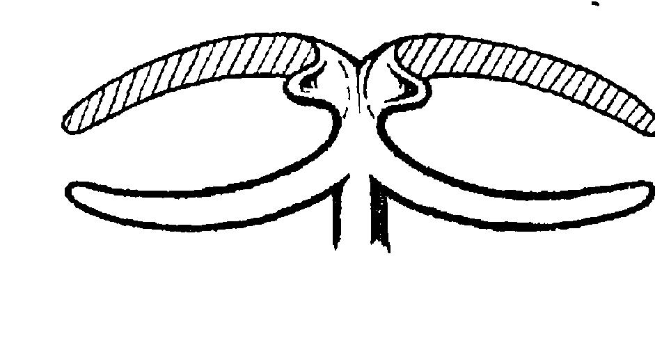 Кламмер