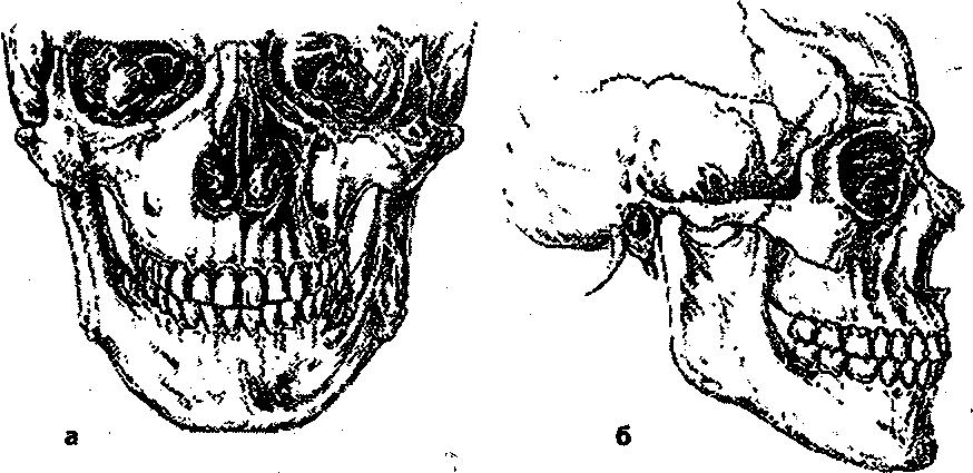 Положение зубных рядов в